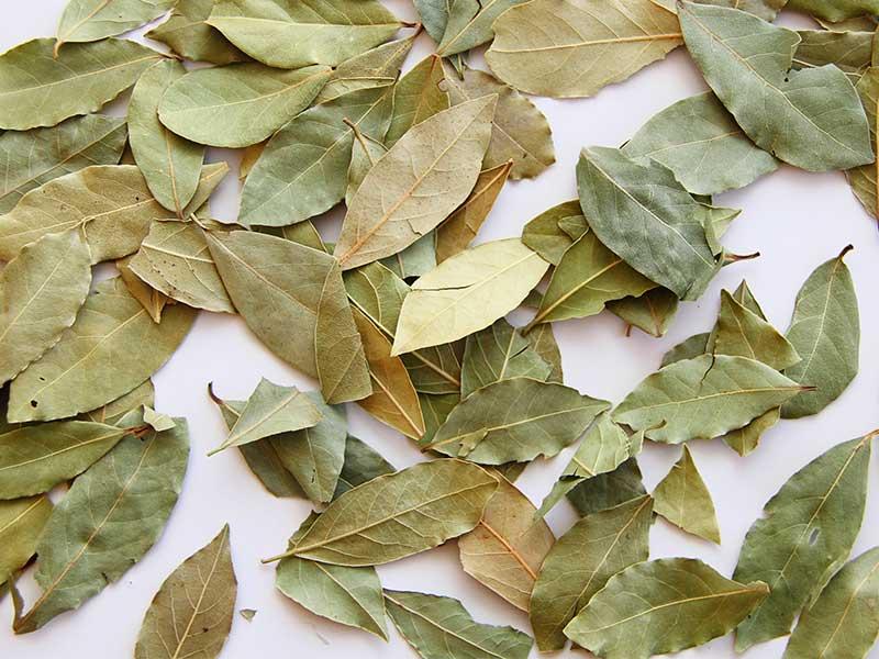 Лавровый лист от тараканов - отзывы, как использовать