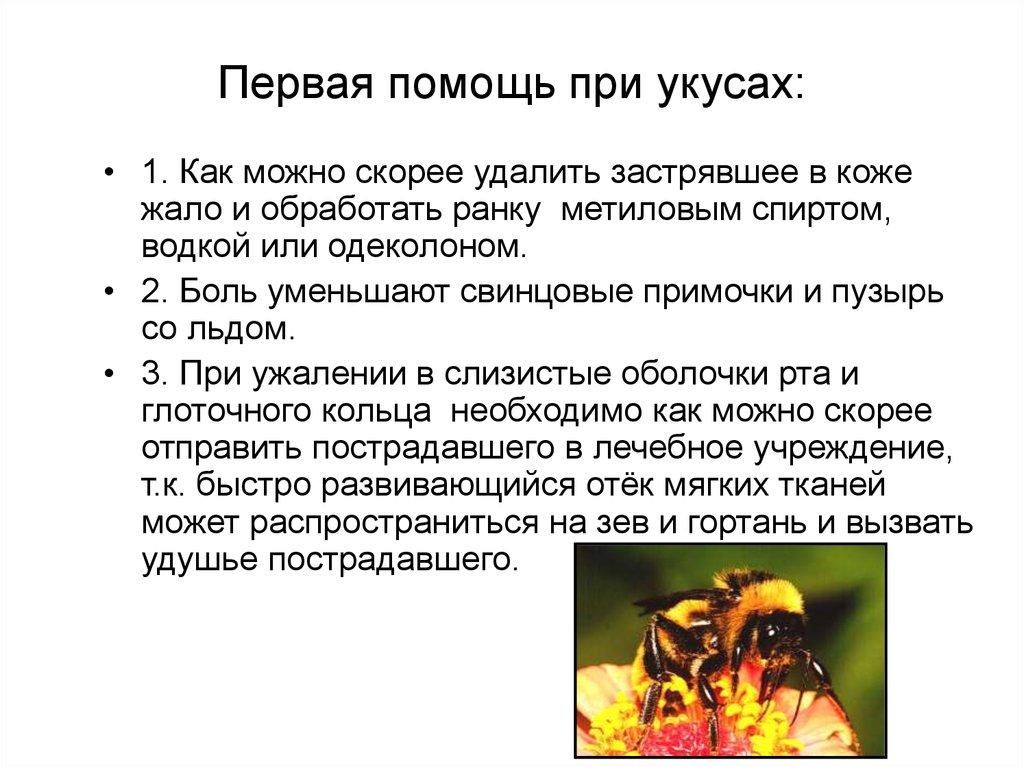 Что делать если укусил тарантул: первая помощь и дальнейшее лечение