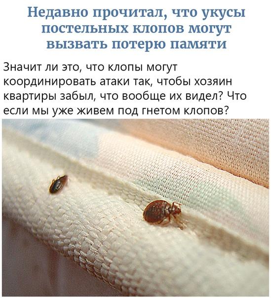 Сколько смогут прожить постельные клопы без человеческой крови