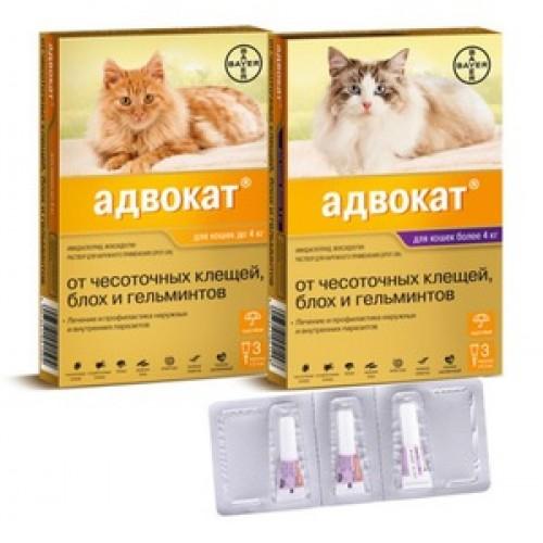 Биовакс для кошек: линейка средств и их эффективность