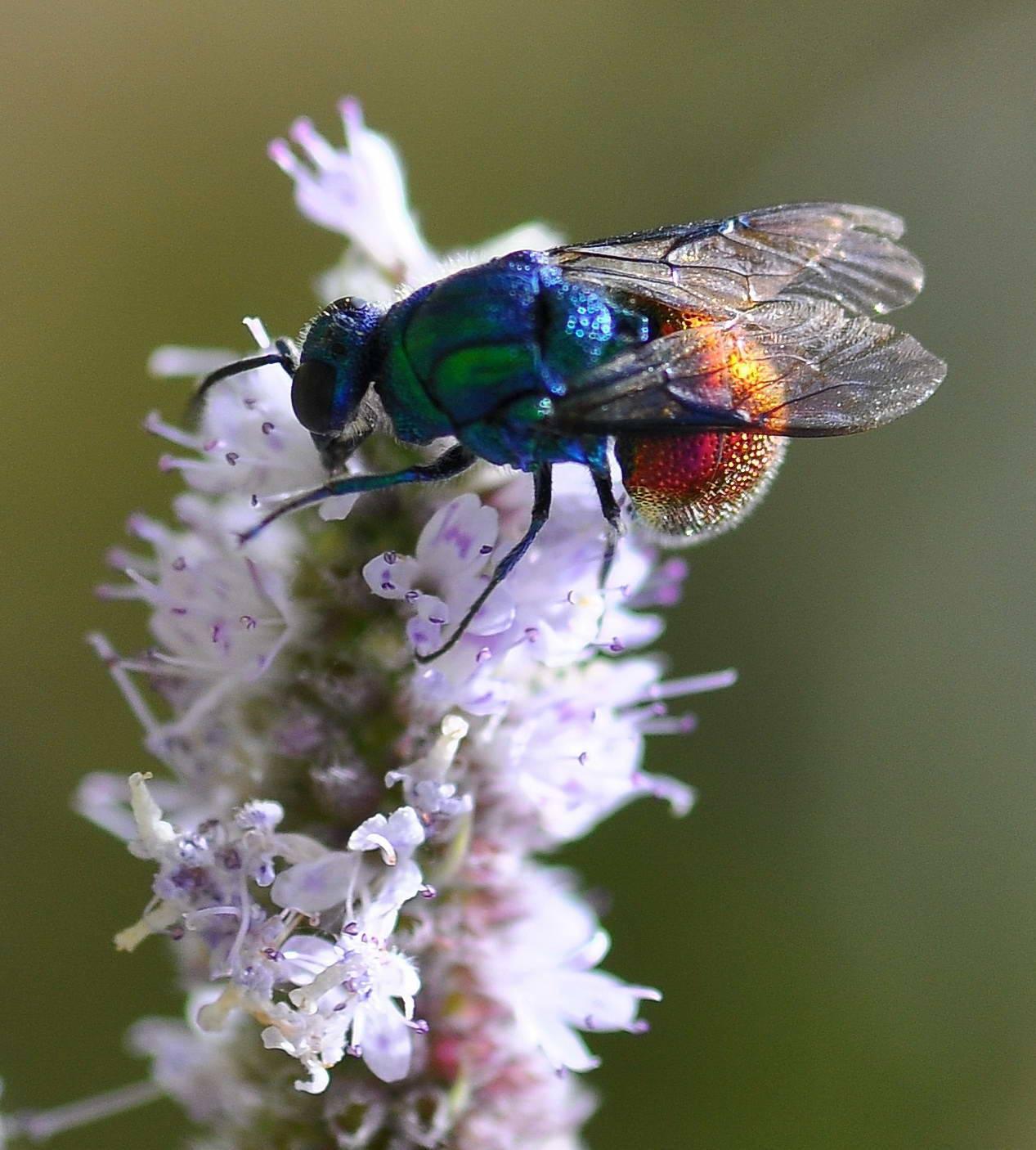 Описание и фото лесной осы