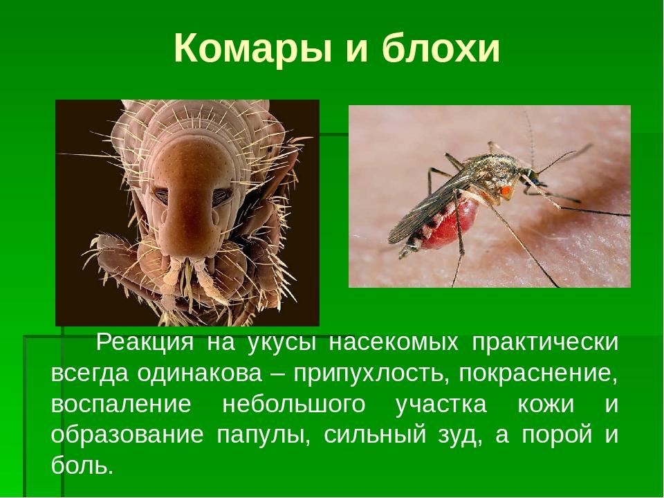 Кусаются ли домашние тараканы | чем опасны укусы | фото