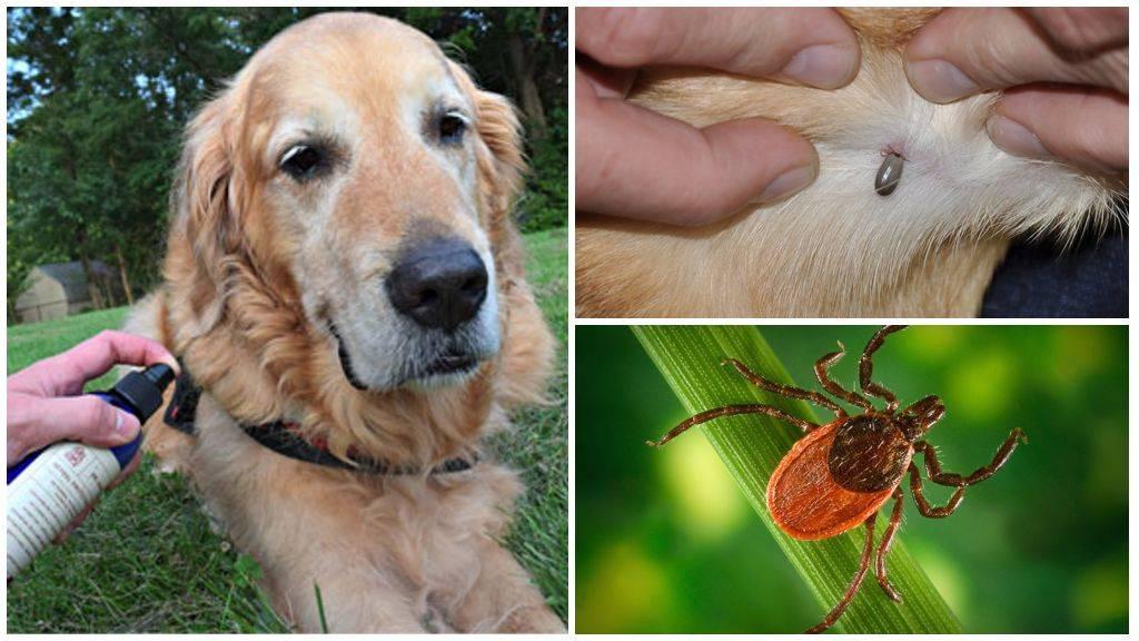 Чем помочь, если собаку покусали комары