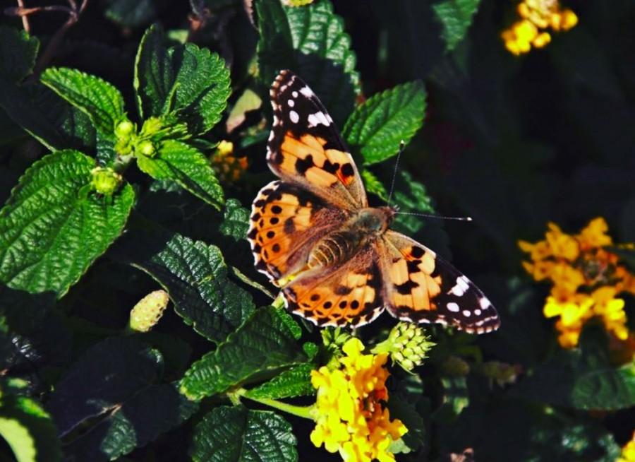 Интересные факты о бабочках - 24сми