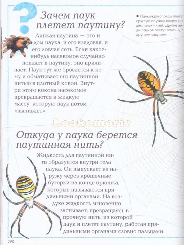 Как паук плетет паутину? зачем пауку паутина?