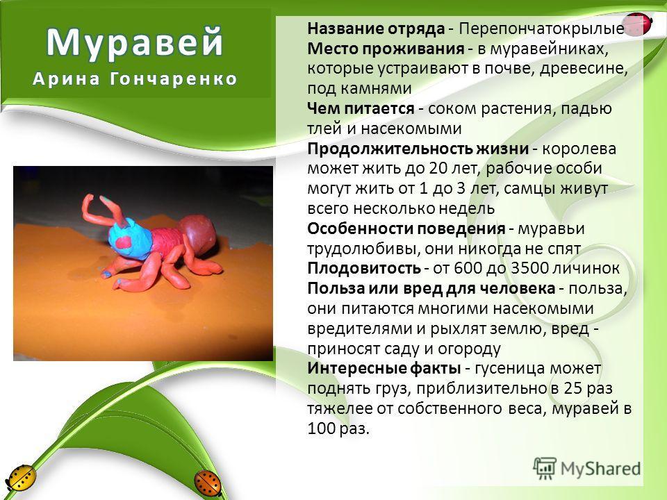 Мотороллер муравей: технические характеристики советского мопеда