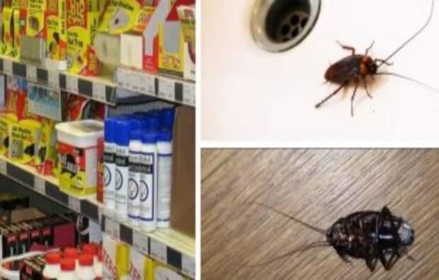 Как быстро вывести тараканов в домашних условиях из квартиры?