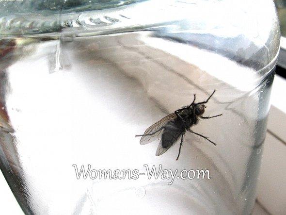 Народные средства от мух в доме: ловушки, растения, методы борьбы