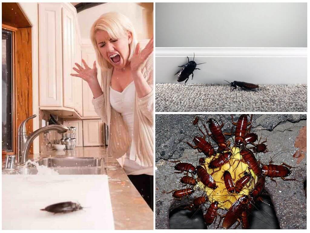Почему люди боятся тараканов