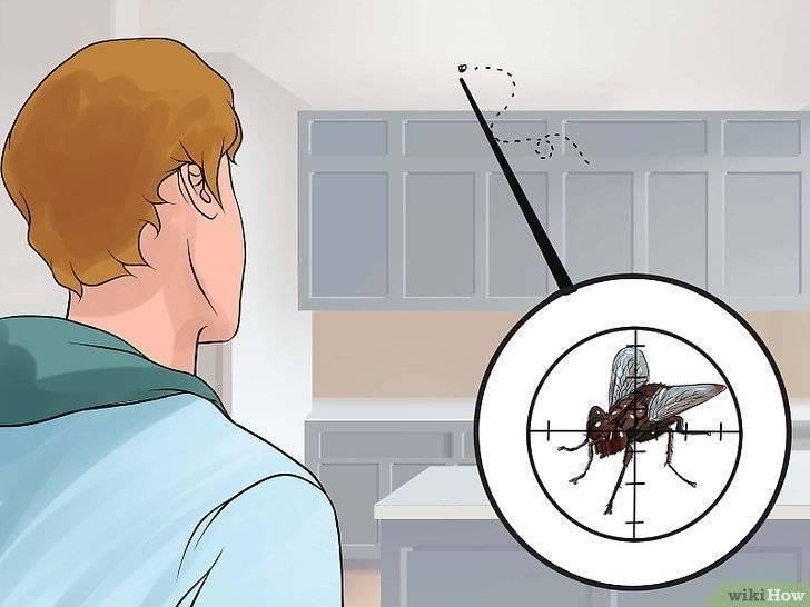 Обзор магазинных и народных средств от мух