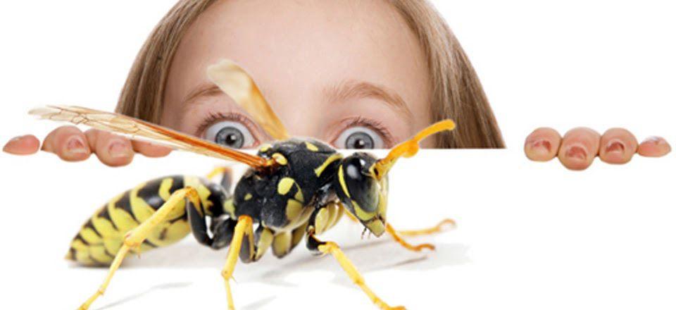 Чего боятся осы — знакомим с вопросом