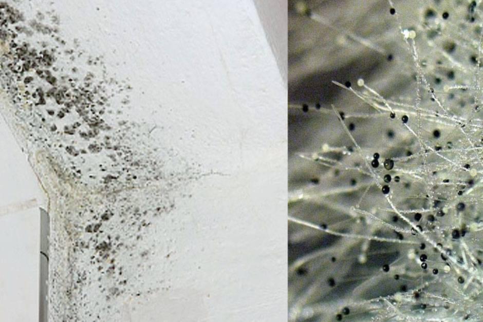 Как избавиться от грибка на стенах в квартире: 6 способов решения проблемы