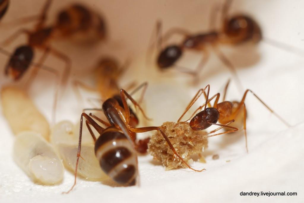 Как избавиться от муравьев на садовом участке быстро и эффективно