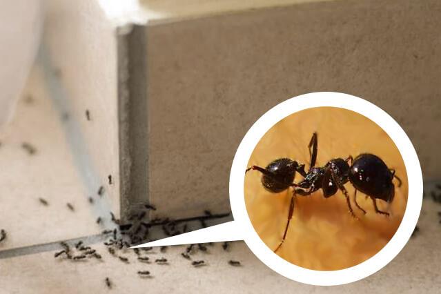 Как избавиться от муравьев? способы, описание, фото и видео - «как и почему»