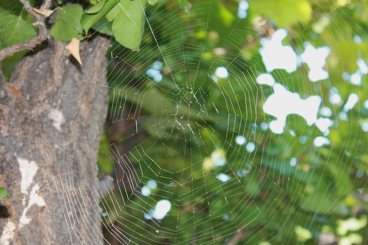 Как избавиться от пауков в квартире: простые советы