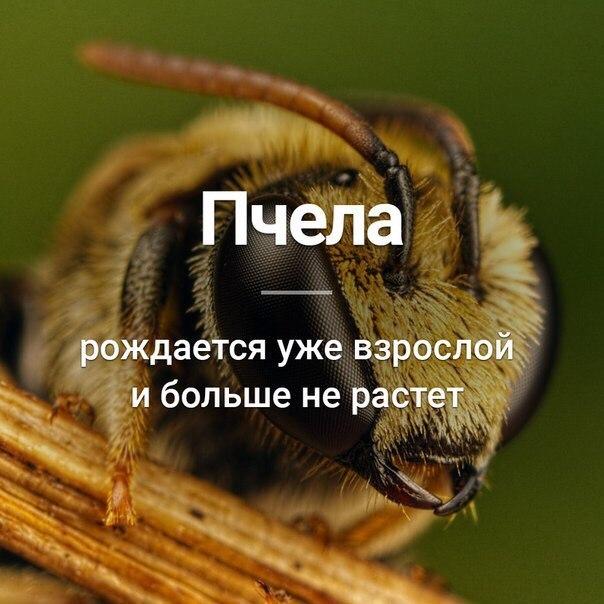 Интересные факты о пчёлах, организация пчелиного улья, разведение пчел – удивительные факты