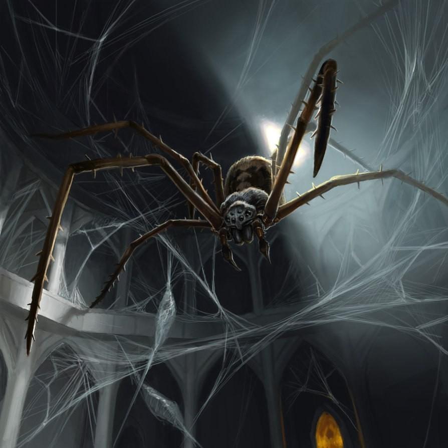 Домашний паук или домовой (комнатный) — какие живут в квартирах, разновидности.