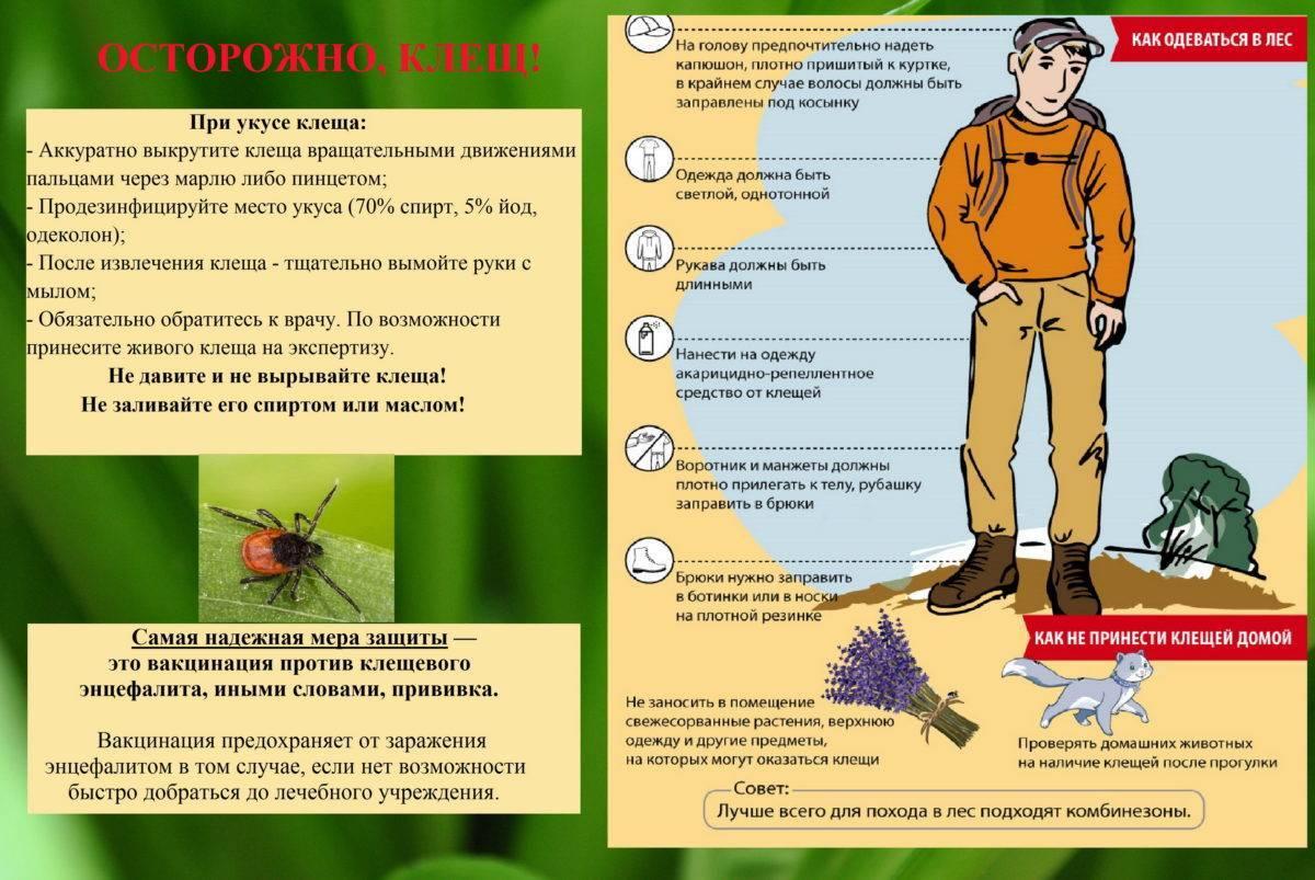 Муниципальное дошкольное образовательное учреждение детский сад №15 «аленушка» ярославского муниципального района