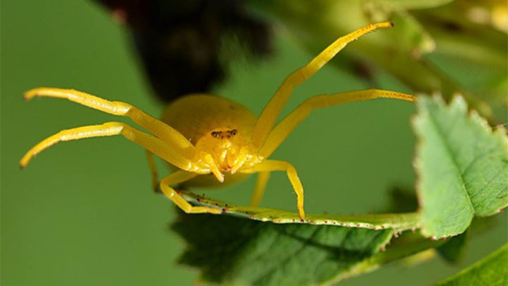 Где обитают фрины — жгутоногие пауки и чем питаются?