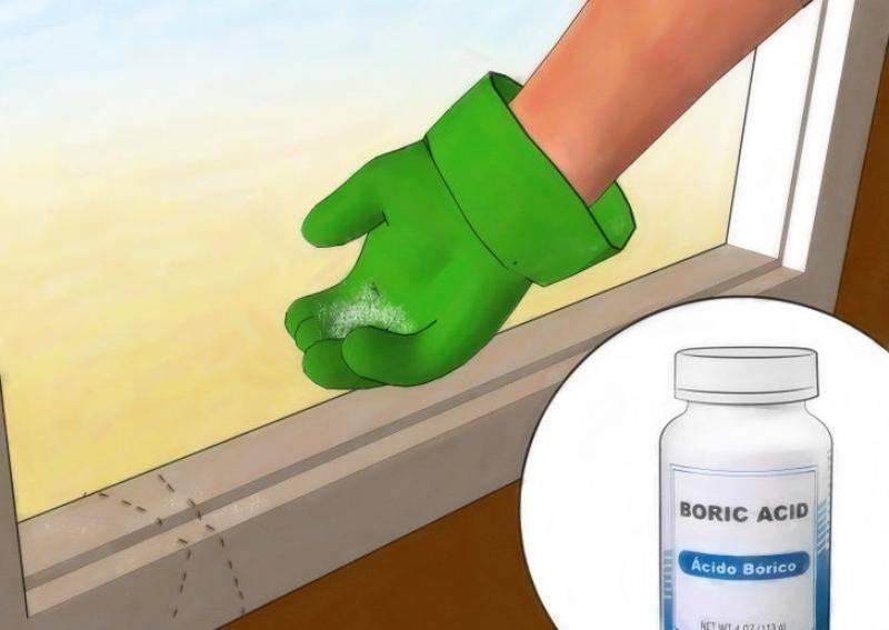Применение борной кислоты от муравьев в доме и квартире