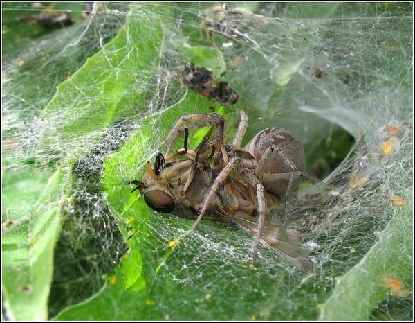 Что едят пауки - рацион диких и домашних пауков