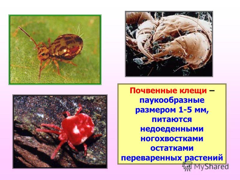 Клещ мучной | справочник пестициды.ru