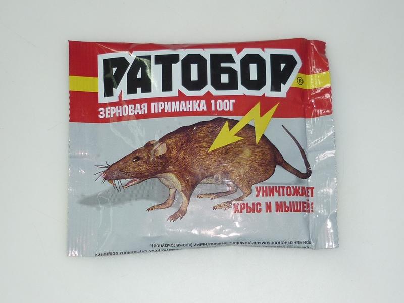 Что боятся крысы — запахи, звуки, растения, свет и другие доступные средства отпугивания грызунов