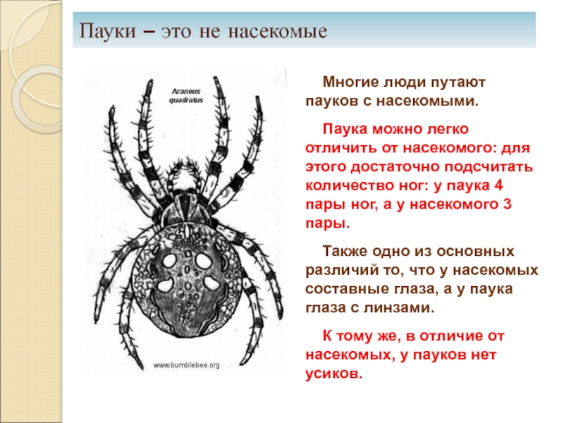 Сколько ног у насекомых: виды ног и описание их строения
