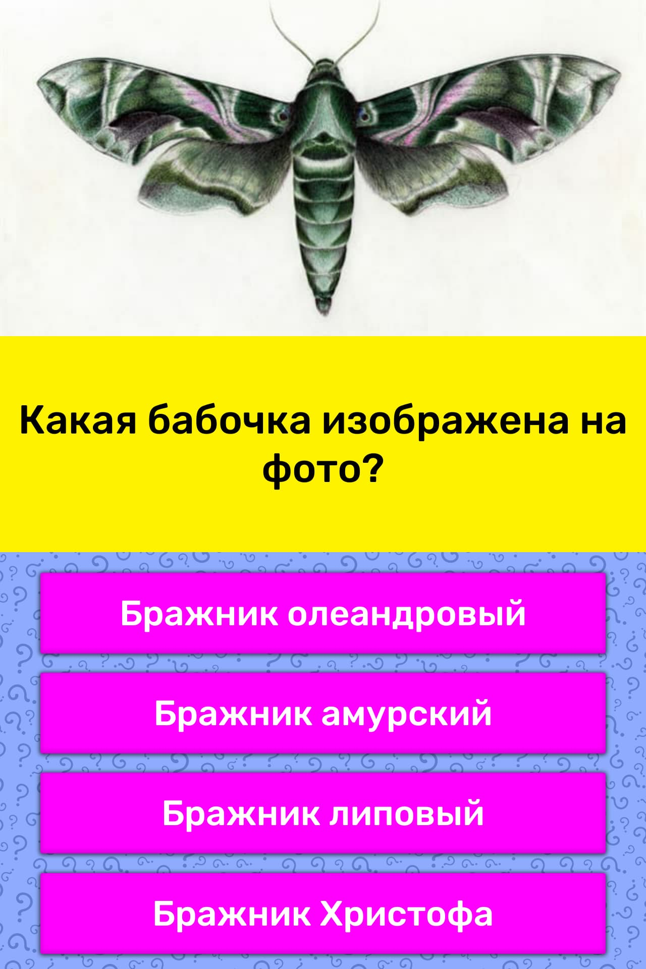 Есть что почитать...: олеандровый бражник