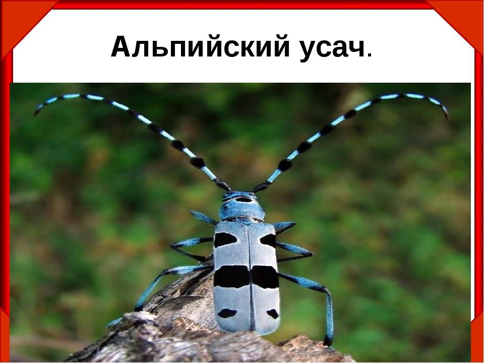 Усач дубовый - насекомое, занесенное в красную книгу