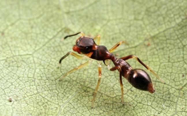 Сколько у муравья ног, что делают лапки