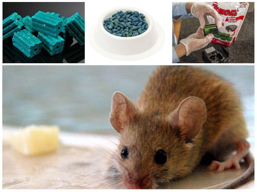 Что делать если собака съела отраву для мышей?