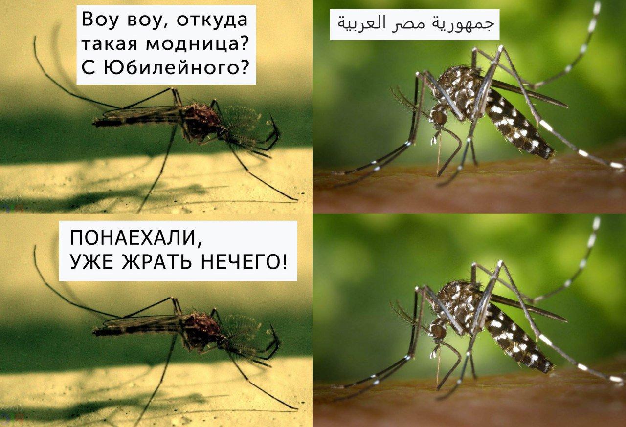 Есть ли комары в турции в июне и июле