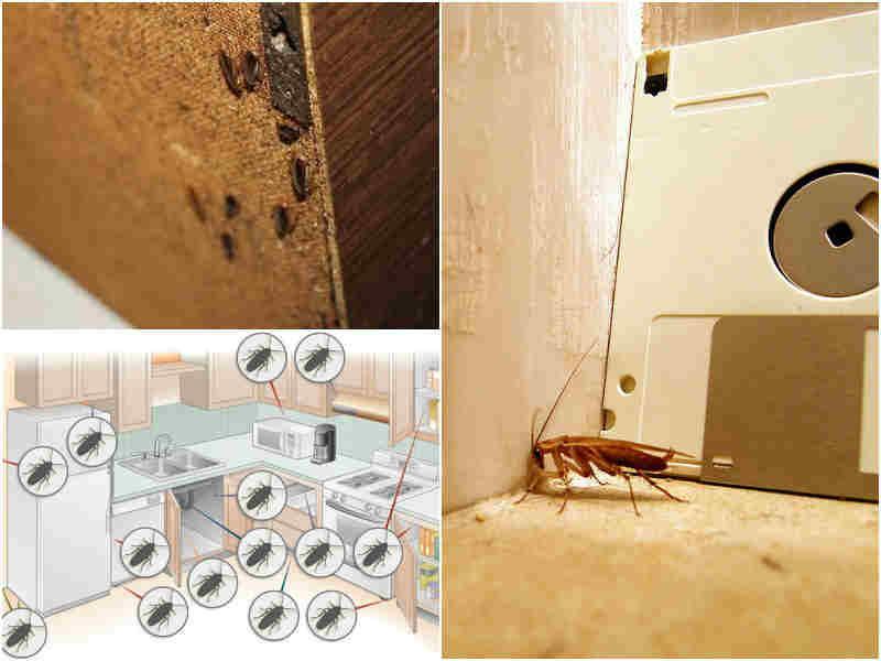 Где тараканы живут в квартире в домашних условиях