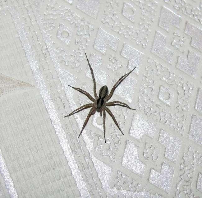 Как избавиться от пауков в частном доме или в квартире, обзор популярных средств