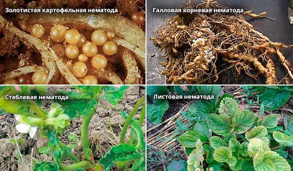 Вредители клубники и борьба с ними: фото болезней, методы лечения, чем обрабатывать для защиты
