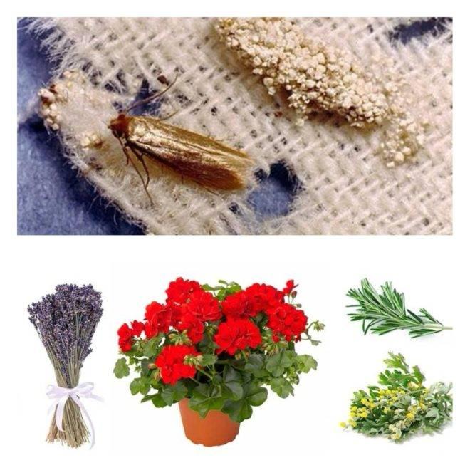 Как навсегда избавиться от моли в доме и квартире: виды и места обитания, эффективные средства от моли