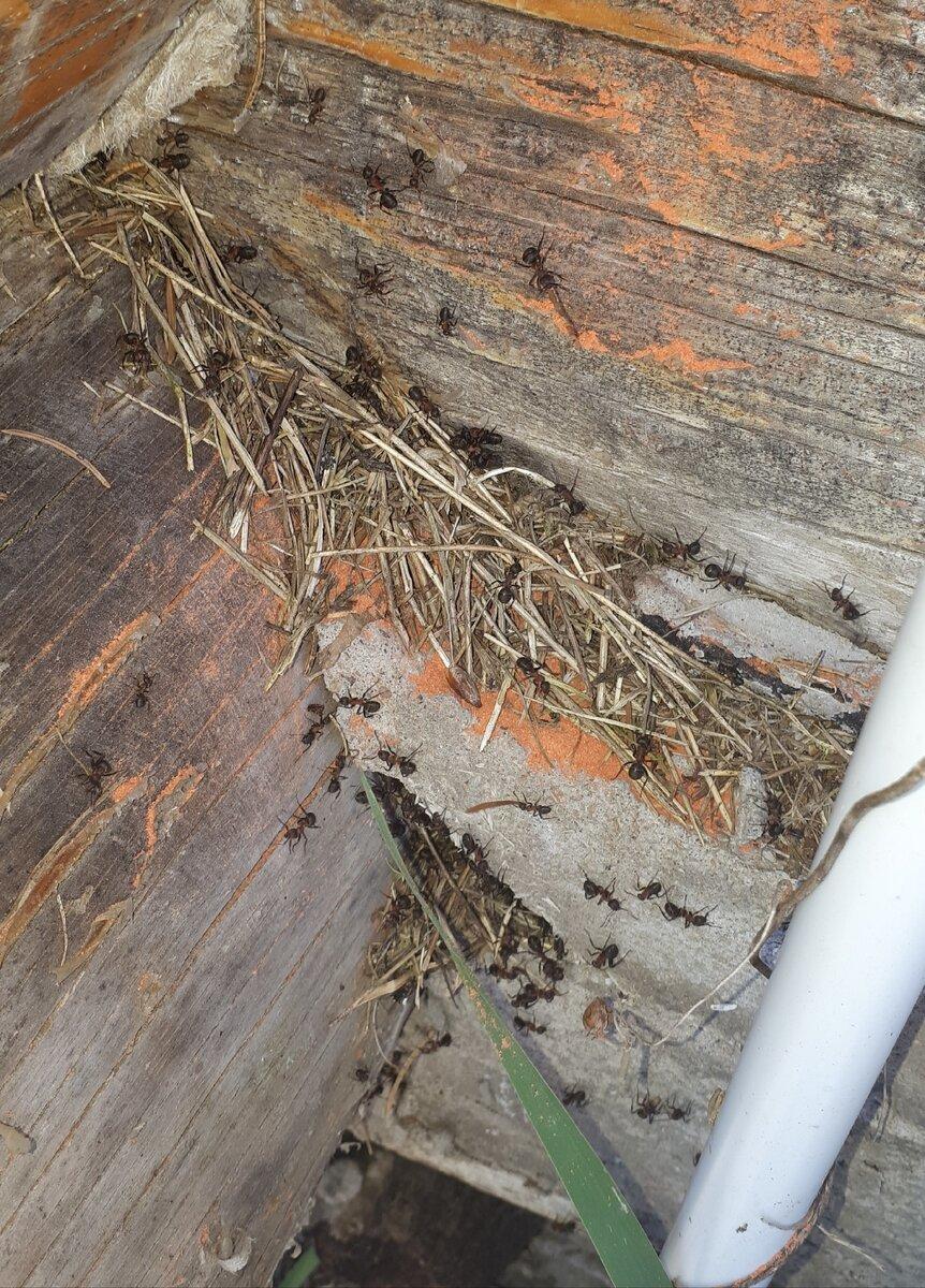 Как избавиться от муравьёв в теплице навсегда народными средствами эффективные способы видео фото