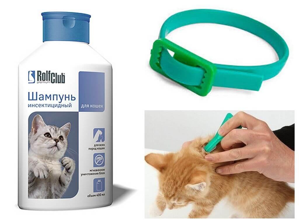 Капли на холку от блох и клещей для кошек – инструкция по применению, отзывы