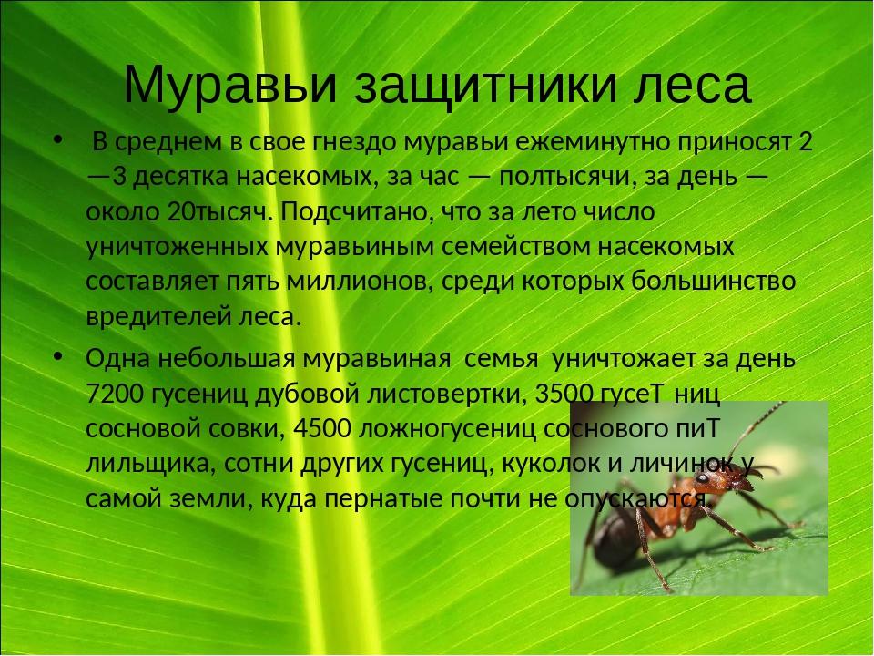 Исследование поведения муравьев в искусственной среде обитания