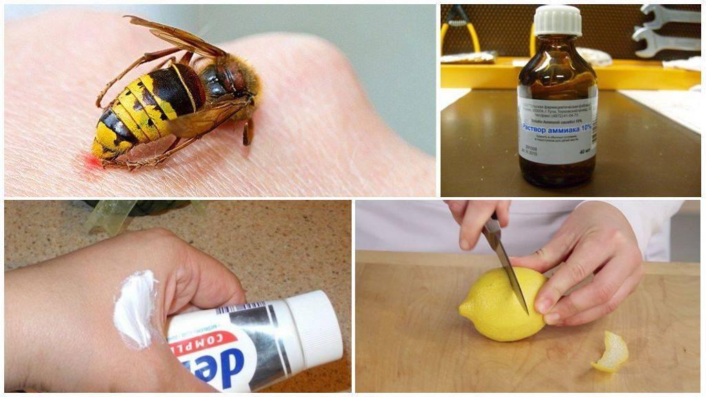 Что делать, если укусила оса? укус осы – опухоль и покраснение – что делать