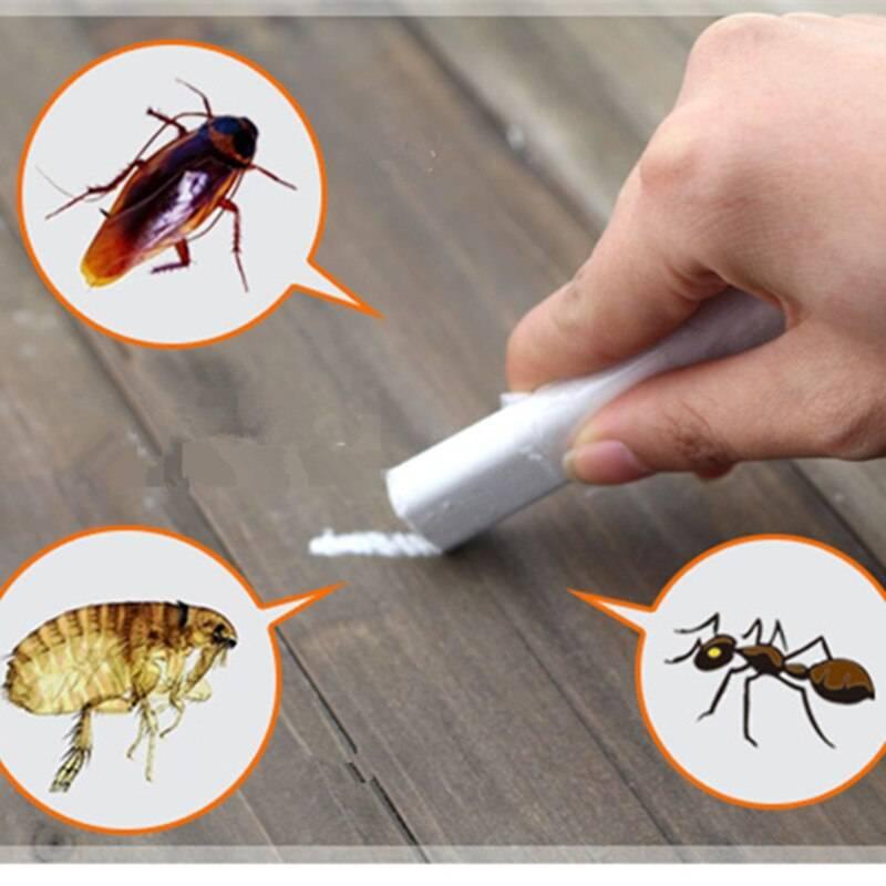 Самые проверенные средства в борьбе с тараканами