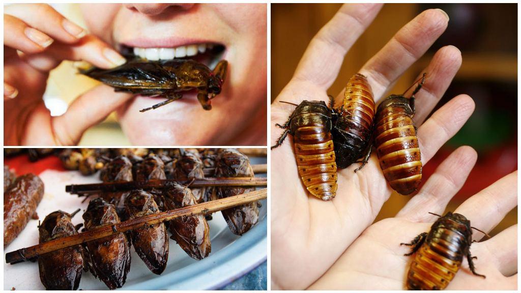 Кто может есть тараканов в квартире, есть ли у них естественные враги?