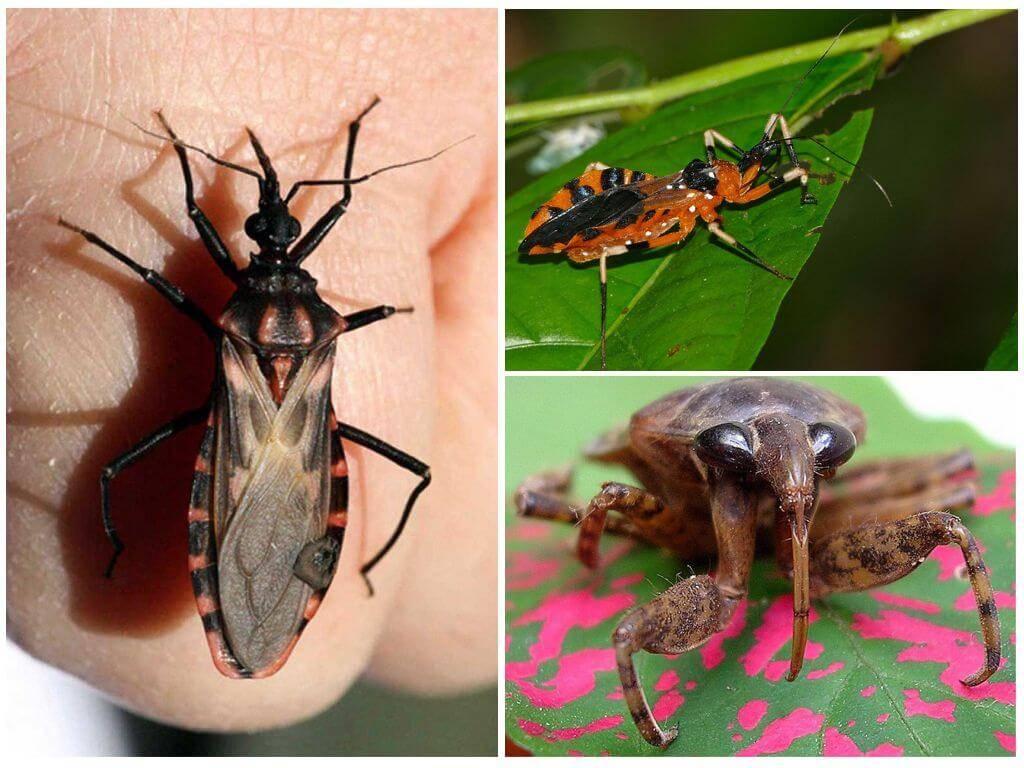 Какие насекомые кусают в постели и в диване - насекомые в квартире