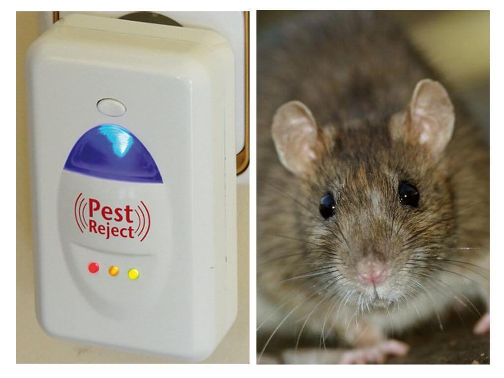 Pest reject (пест реджект) от тараканов – ультразвуковой отпугиватель нового поколения, отзывы об использовании