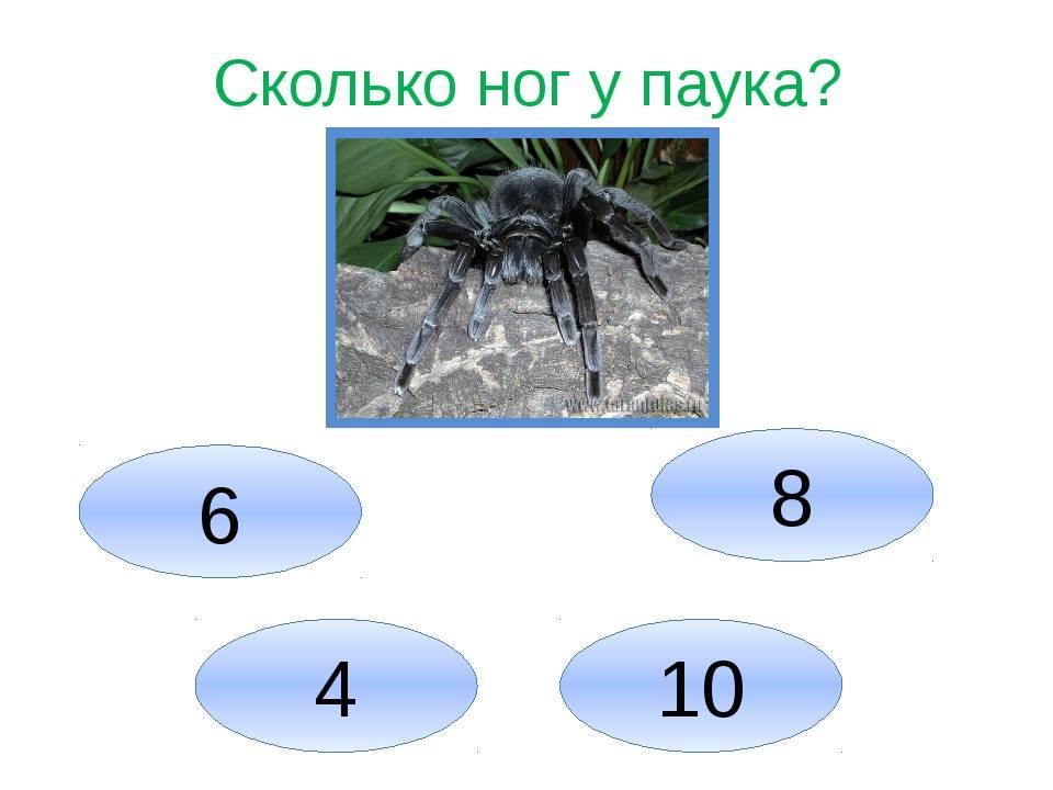 Сколько ног у паука: 6, 8 или 10? отличия лап от других конечностей