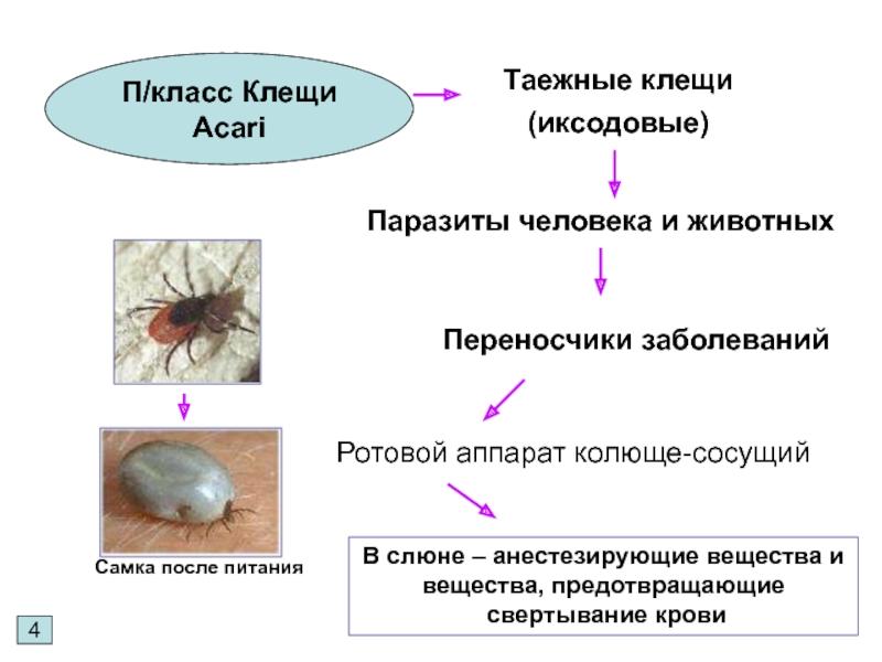 Влияние температуры на жизнь клещей – при какой погибают, при какой зимуют в природе