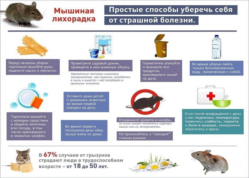 Мышиная лихорадка у мужчин и женщин: симптомы и лечение, признаки появления мышиной лихорадки