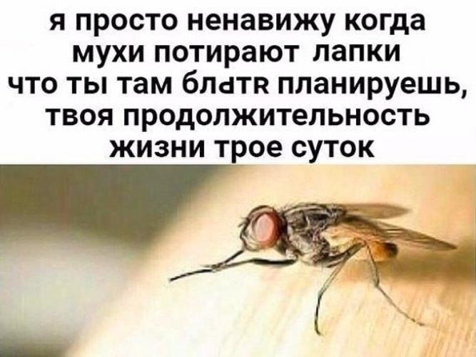 Почему мухи трут лапки и что это им даёт? коварство или необходимость?