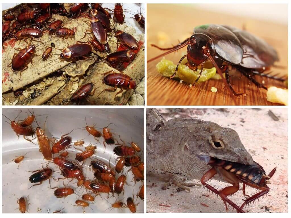Кто из животных ест тараканов?